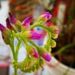 plante-carnivore-les-dents-de-la-terre-enzo-defer-plantes-carnivores-passion-entrepreneur