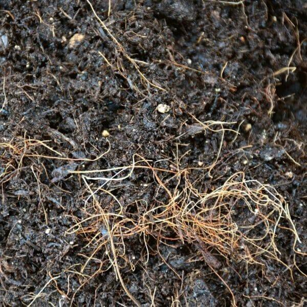 substrat-alternatif-sans-tourbe-terre-fibre-de-coco-sphaigne-dionée-sarracenia