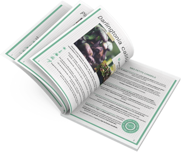 fiches-culture-plante-carnivore-cephalotus-drosera-sarracenia-dionaea-muscipula-pinguicula