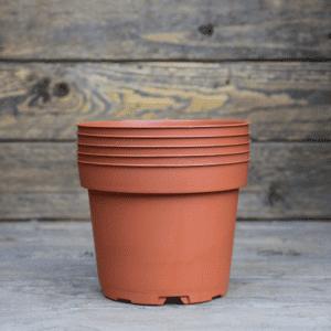pots-plante-carnivore-plastique-0,5L-Sarracenia-Dionée-Drosera