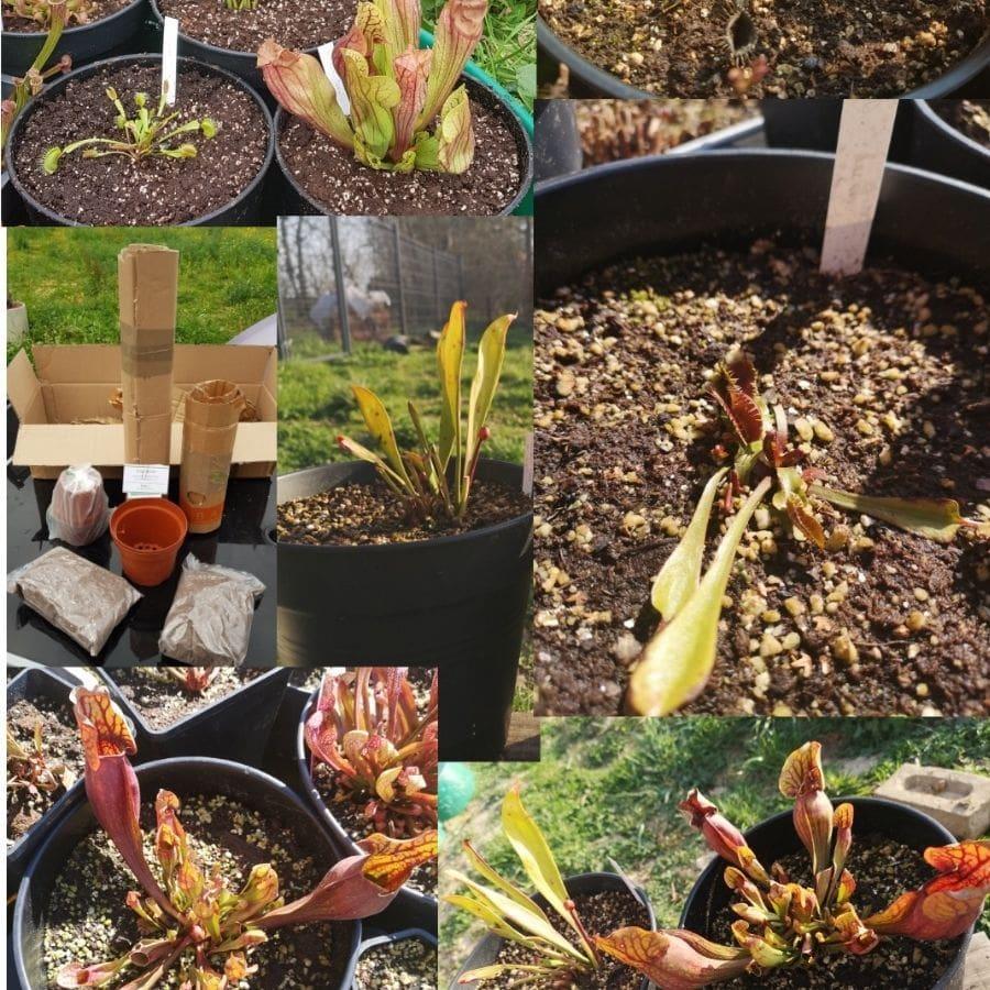 avis client plante carnivore
