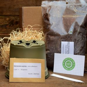 kit de germination - sarracenia - plante carnivore