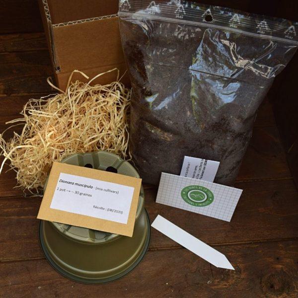 kit de germination - dionaea muscipula - plante carnivore