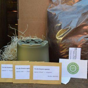 kit de germination - drosera capensis - plante carnivore