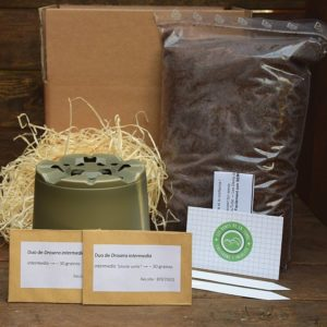 kit de germination - drosera intermedia - plante carnivore
