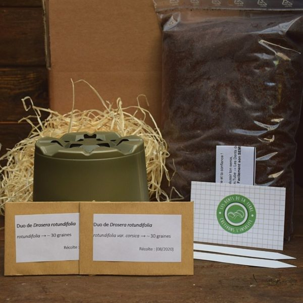 kit de germination - drosera rotundifolia - plante carnivore