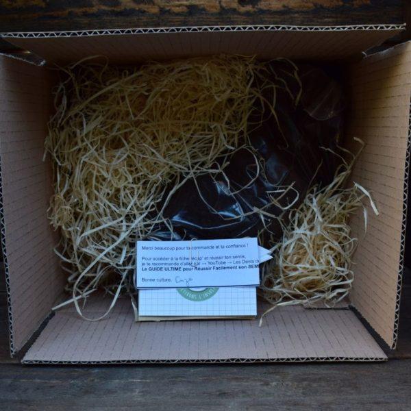 kit de germination - dionée - plante carnivore