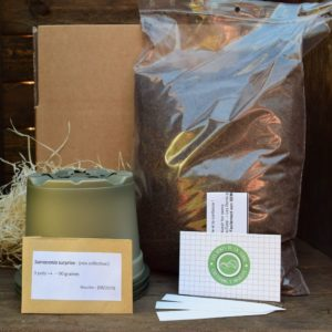 kit de germination - sarracenia - plante carnivore